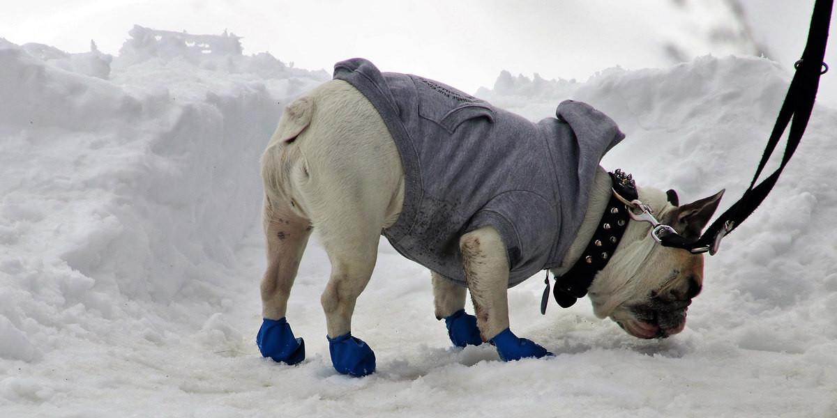 Quel manteau pour son chien ?