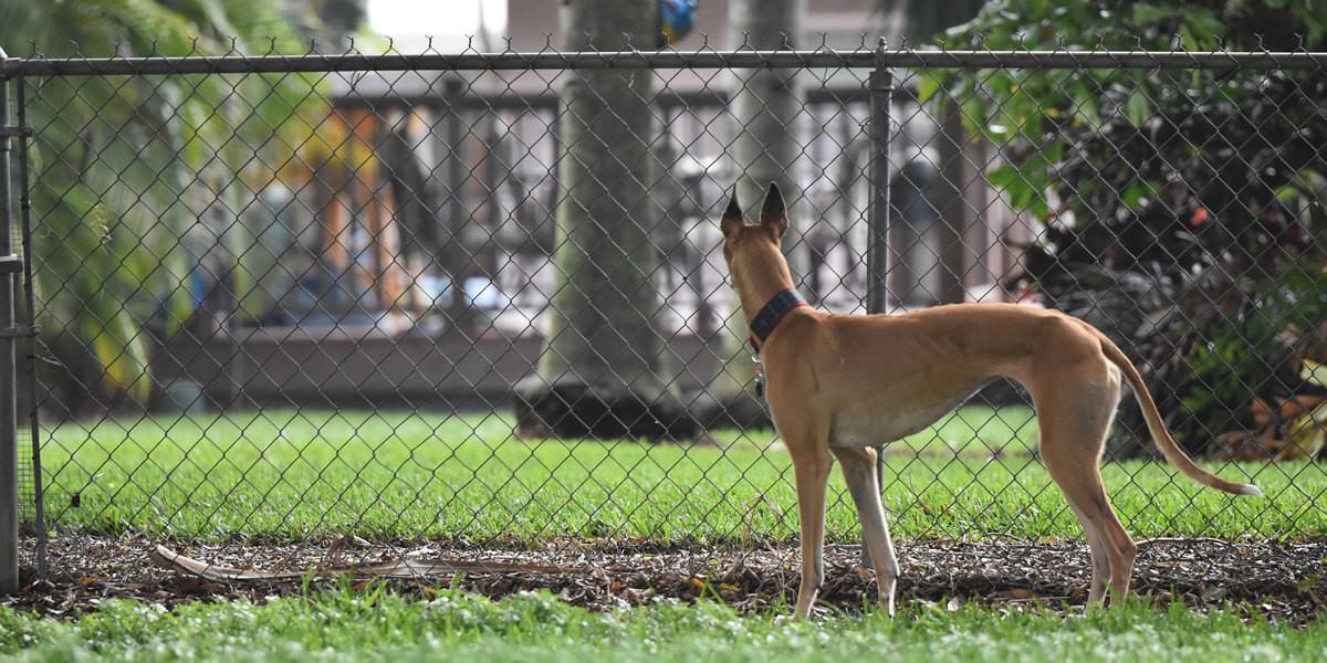 Quelle clôture électrique pour chien choisir ?