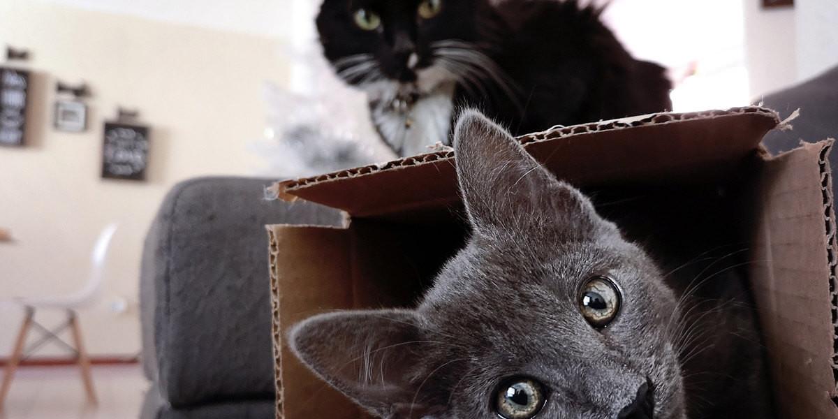 Où mettre la litière de son chat ?
