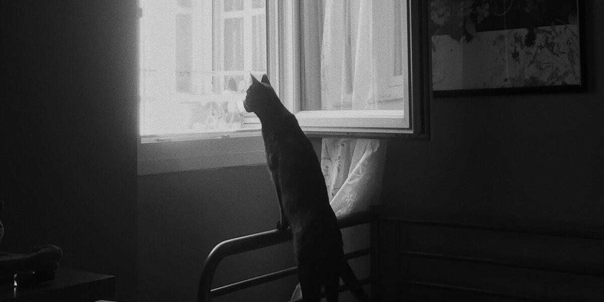 Comment empêcher un chat de sortir par la fenêtre ?