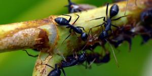 Terre de diatomée pour fourmis