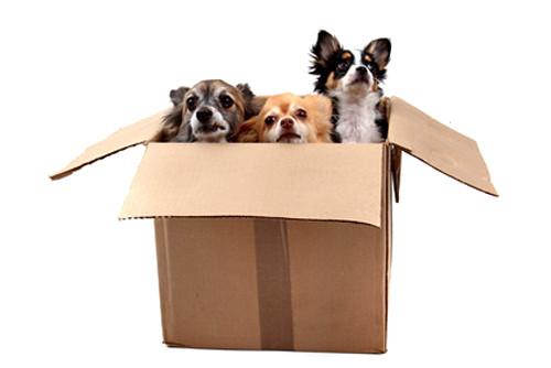 Comment choisir la taille de la niche pour son chien?