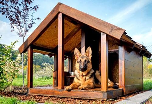 Quel endroit choisir pour installer la niche de son chien
