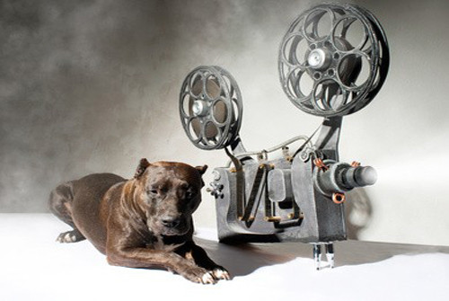 Vidéo méthode de dressage par Éric Tramson, éducateur canin