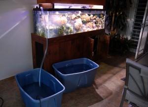 Le changement d'eau de votre aquarium