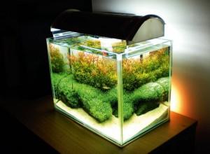 Installation de votre aquarium