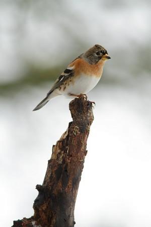 Arrivée de l'oiseau : comment le rendre heureux