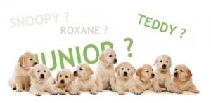 Des noms pour votre chien : 2014, année du « J »