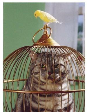 Emplacement de la cage de votre oiseau