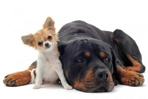 Choisir un chiot ou un chien adulte ?