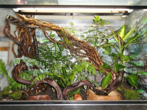 Comment aménager et entretenir un terrarium pour serpent