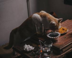 Croquettes pour chat à volonté ou à heure fixe ?