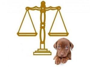 La réglementation pour l'achat d'un chien