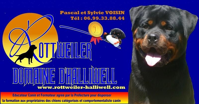 Elevage DOMAINE D HALIWELL Rottweiler *