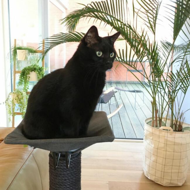 Arbre à chat avec plateforme hamac et griffoir Iwaki