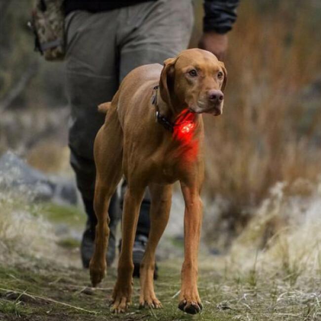 Balise lumineuse pour chien The Beacon Ruffwear