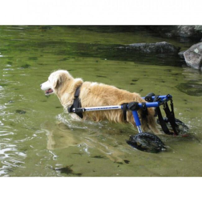 Chariot Cani-Cart Liberty ® Walkin Wheels pour chiens handicapés ou paralysés