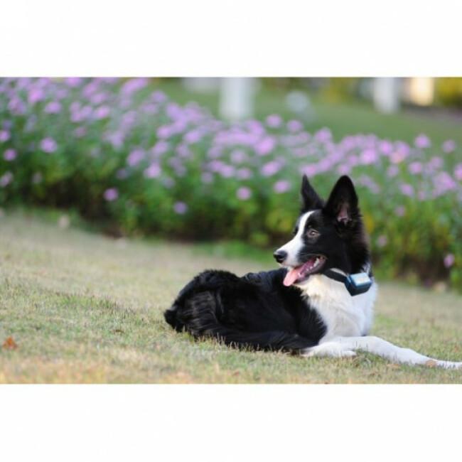Collier anti-aboiement pour chien + de 15 kg Canicalm Standard Num'Axes