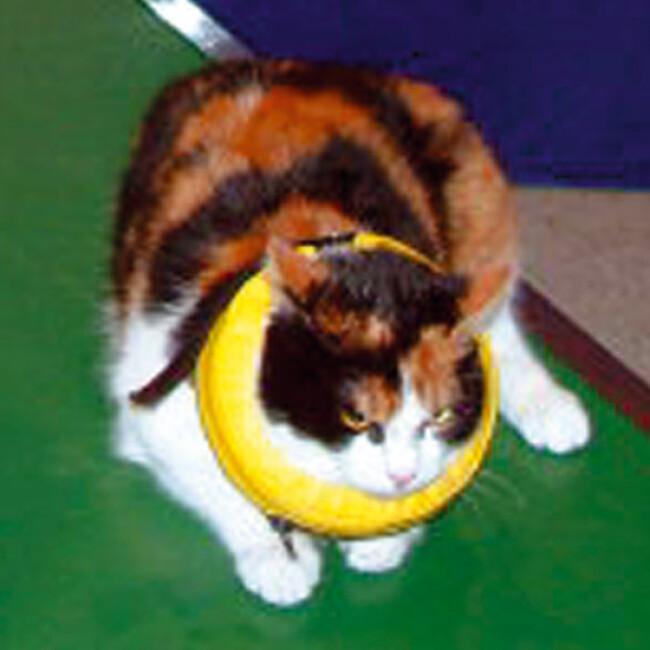 Collier lune protection gonflable Carcan anti léchage pour chien et chat