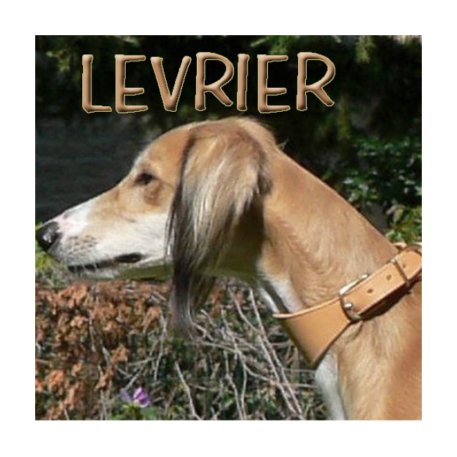 Collier spécial sellerie Lévrier