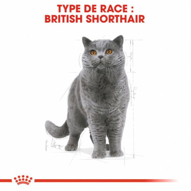 Croquettes pour chat adulte British Shorthair Royal Canin