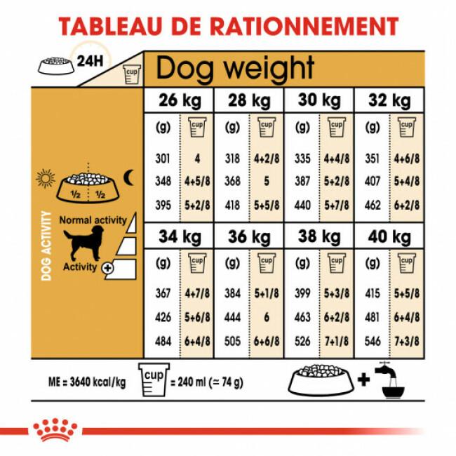 Croquettes pour chien adulte Royal Canin Labrador Retriever