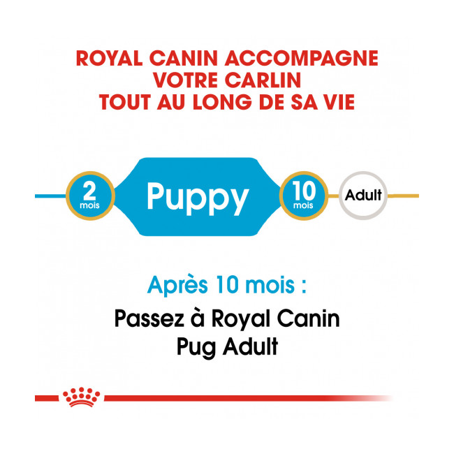 Croquettes pour chiot Royal Canin Carlin Breed Pug Junior sac 1,5 kg