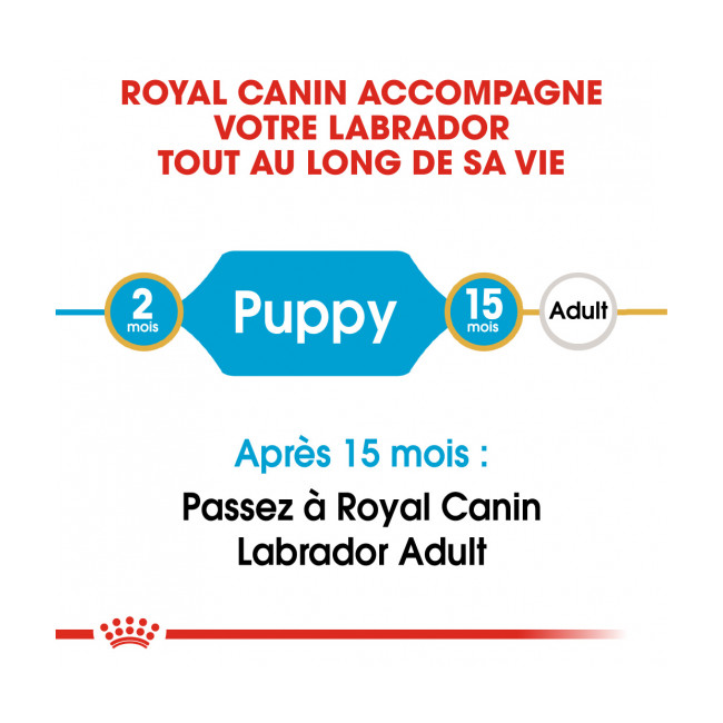 Croquettes Royal Canin Labrador Retriever Junior