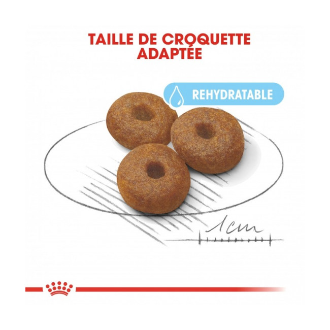 Croquettes Royal Canin Maxi Starter Mother & Babydog