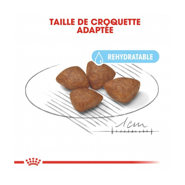 Croquettes Royal Canin Mini Starter Mother & Babydog