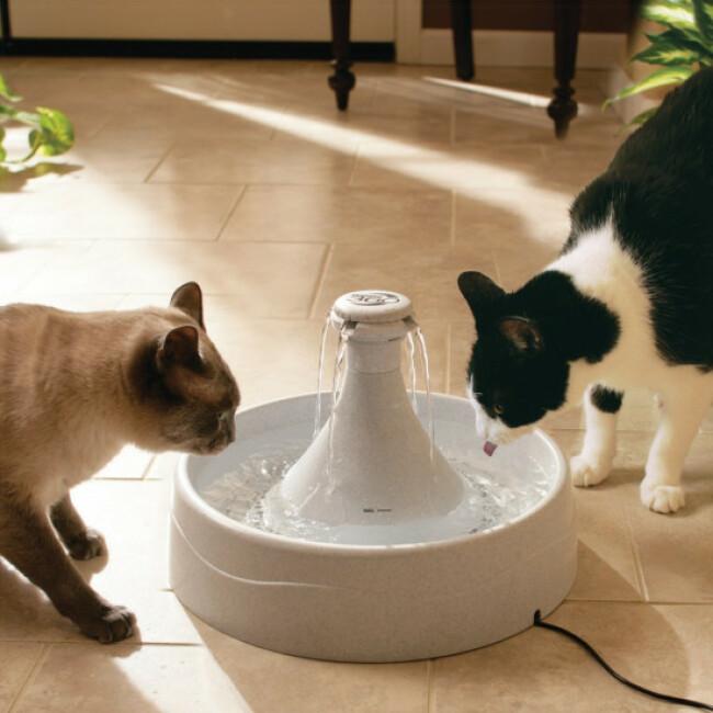 Fontaine à eau 360° Drinkwell Petsafe 3,8 litres pour chiens et chats