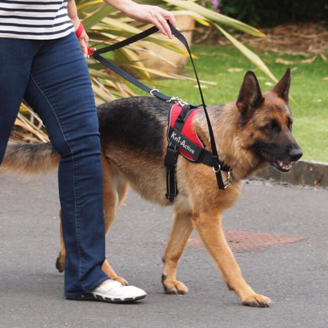 Harnais d'éducation Multisport Kn'1 Active Speed-Control pour chien
