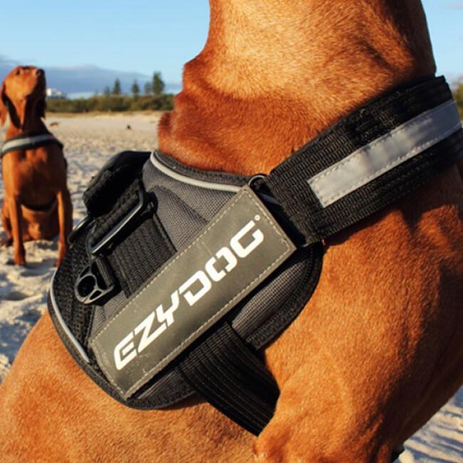 Harnais polyvalent Ezydog Convert pour chien
