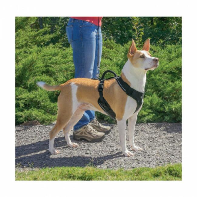 Harnais pour chien EasySport Petsafe bleu