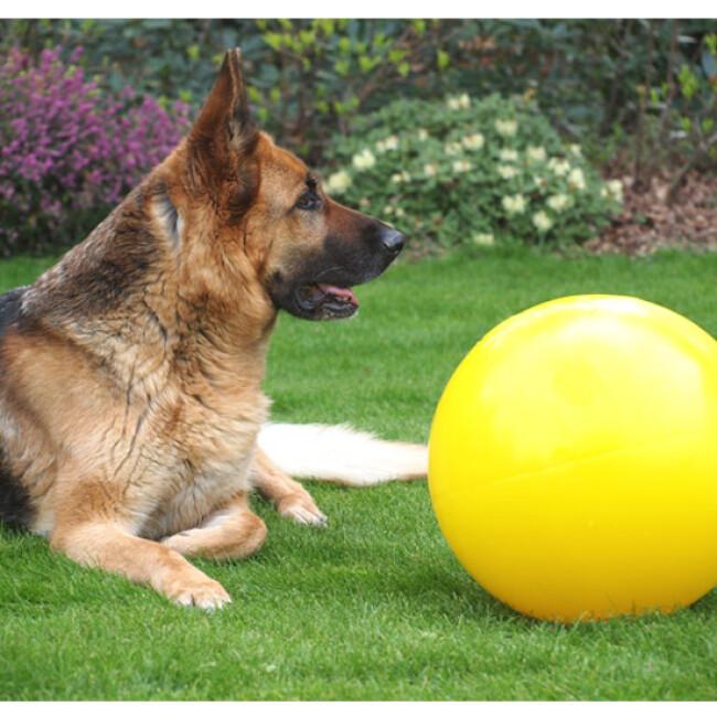 Jolly Ball Push-N-Play jeu de boule pour chien