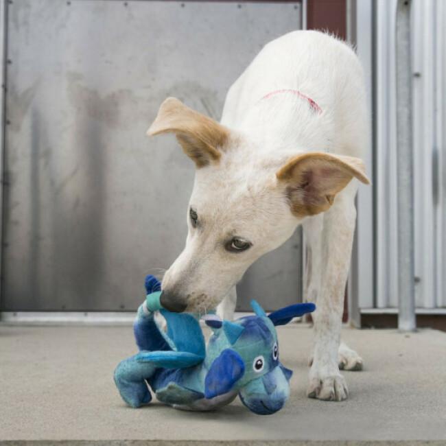 Jouet en peluche dragon avec corde pour chien KONG Knots