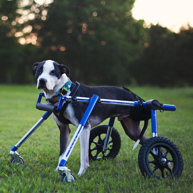 Kit-Front déambulateur Canis-Cart Liberty® pour chien handicapé ou paralysé