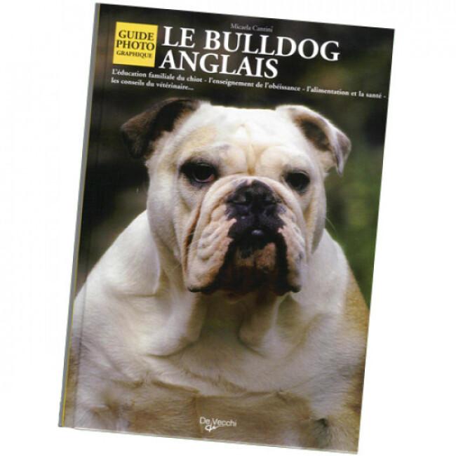 Portee De Chiot Bulldog Anglais A Adopter