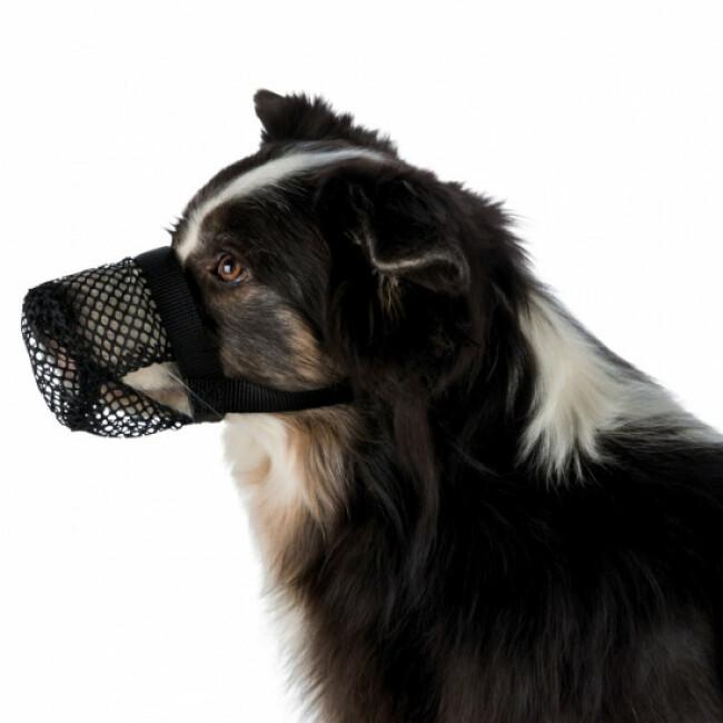 Protection anti intoxication noire en polyester Trixie pour chien