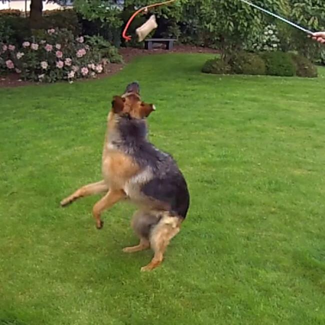 Tige télescopique Reizangel avec leurre à mordre pour chien