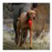Image 4 - Balise lumineuse pour chien The Beacon Ruffwear