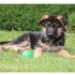 Image 2 - Balle Everlasting très résistante pour chien