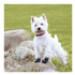 Image 4 - Bottines Kn'1 Grip Active pour protection des coussinets de chien