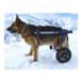 Image 7 - Chariot Cani-Cart Liberty ® Walkin Wheels pour chiens handicapés ou paralysés