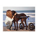 Image 8 - Chariot Cani-Cart Liberty ® Walkin Wheels pour chiens handicapés ou paralysés