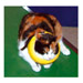 Image 4 - Collier lune protection gonflable Carcan anti léchage pour chien et chat