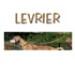 Image 2 - Collier spécial sellerie Lévrier