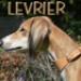Image 5 - Collier spécial sellerie Lévrier