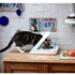 Image 5 - Distributeur  nourriture à puce électronique Surefeed pour chat
