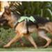 Image 9 - Harnais d'assistance Kn'1 Active Grip pour chien
